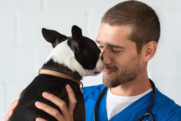 Vet loving pet dog